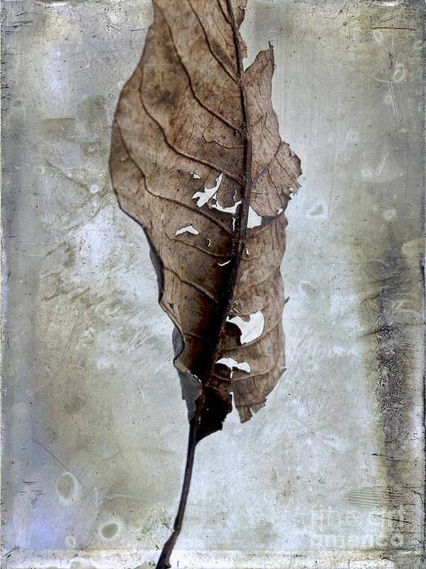 Studio Shot Poster featuring the photograph Textured Leaf by Bernard Jaubert
