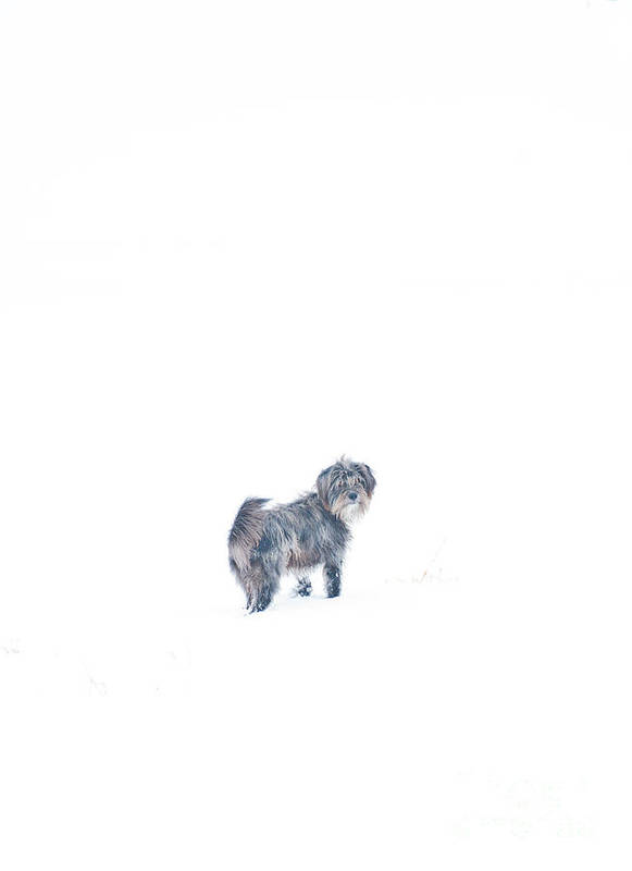 Four Legged Animal Poster featuring the photograph Rocky by Cheryl Baxter