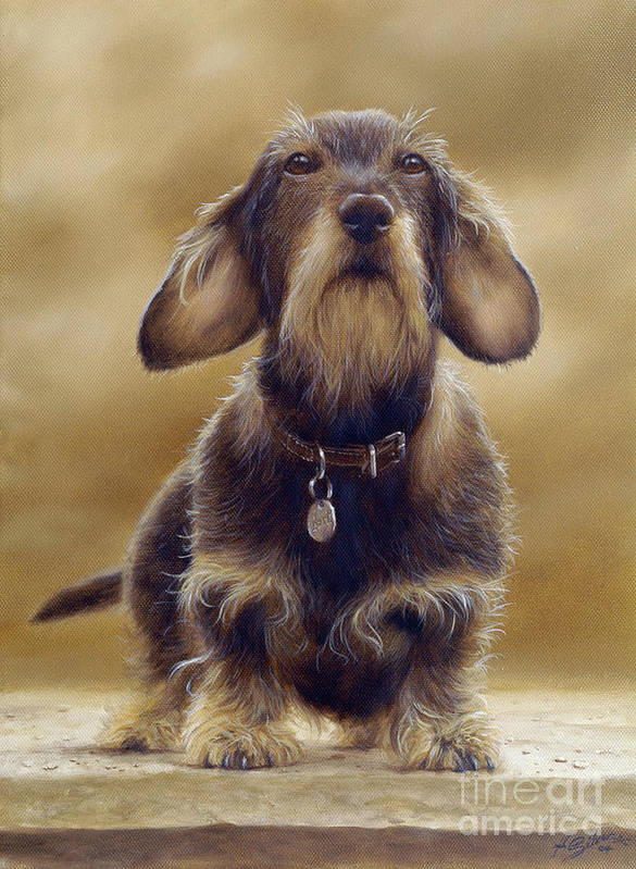 Dog Paintings Poster featuring the painting Wire Haired Dachshund by John Silver