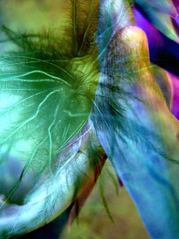 Abstract Poster featuring the photograph Art Of Deception by Shirley Sirois