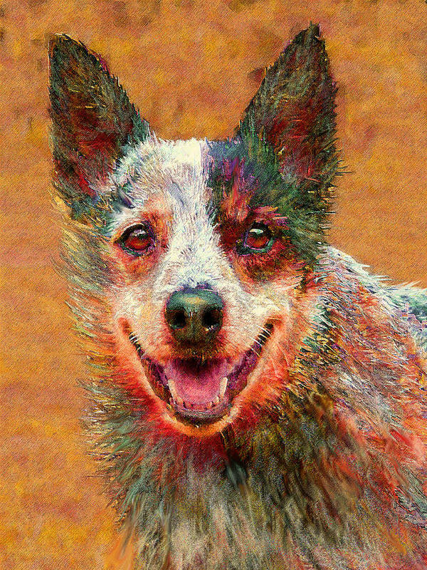 Australian Cattle Dog Poster featuring the digital art Australian Cattle Dog by Jane Schnetlage