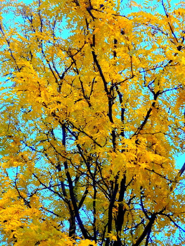 Tree Poster featuring the photograph Colors Of Fall - Smatter by Deborah Crew-Johnson