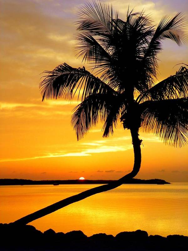 Sunsets Poster featuring the photograph Crooked Palm by Karen Wiles
