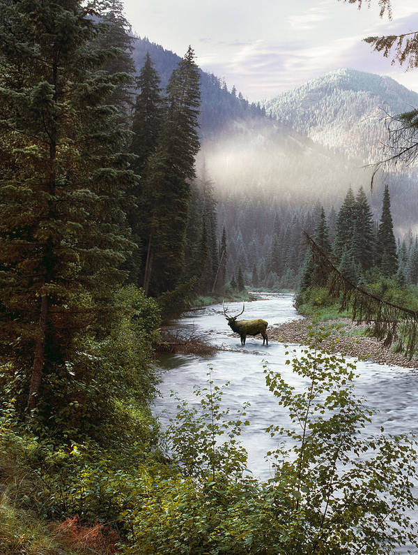Elk Poster featuring the photograph Elk Crossing by Leland D Howard