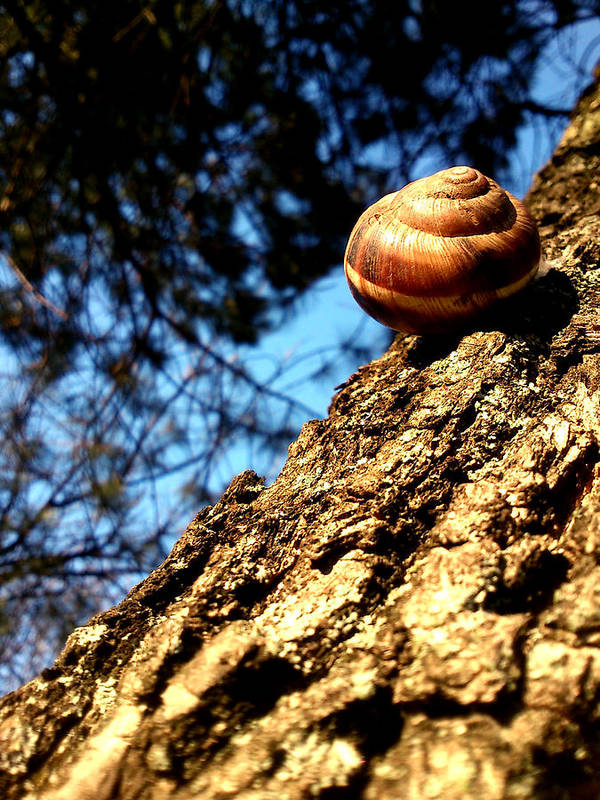 Snail Poster featuring the photograph Time To Wake Up by Lucy D