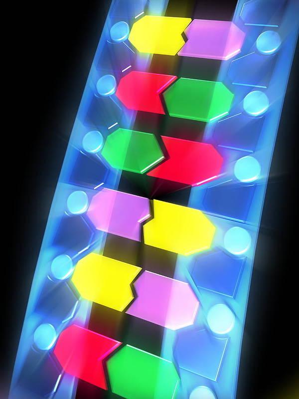 Molecule Poster featuring the photograph Dna Molecule by Pasieka