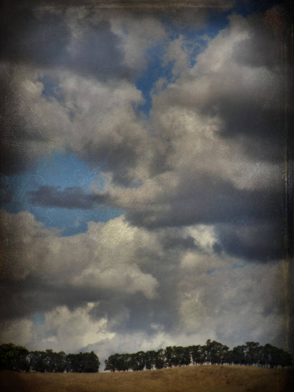 San Leandro Poster featuring the photograph If The World Ends Today by Laurie Search