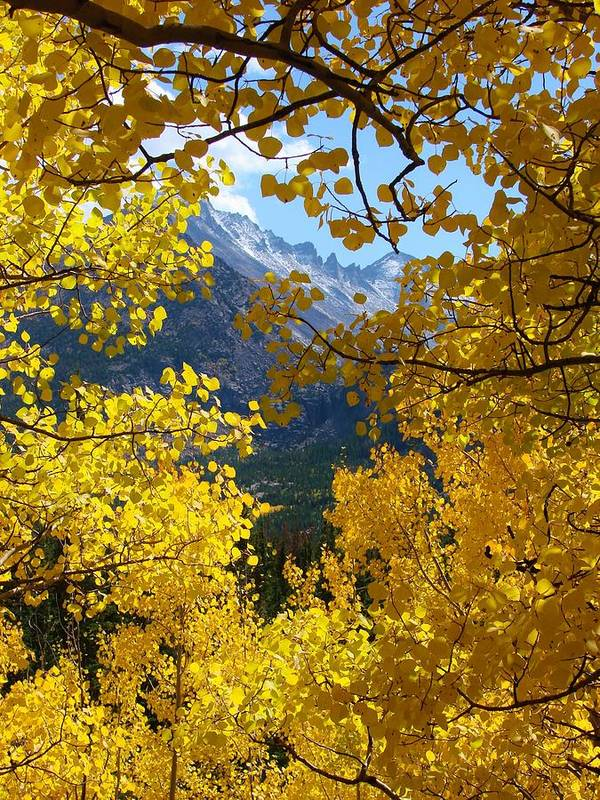 Aspens Poster featuring the photograph Peephole Thru The Aspens by Margaret Bobb