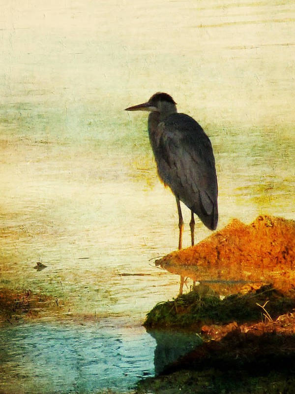Blue Heron Poster featuring the photograph The Lonely Hunter by Amy Tyler