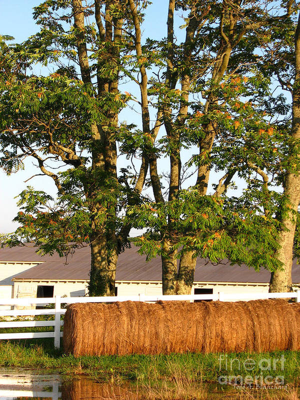 Landscape Poster featuring the photograph Hay Bales And Trees by Todd A Blanchard
