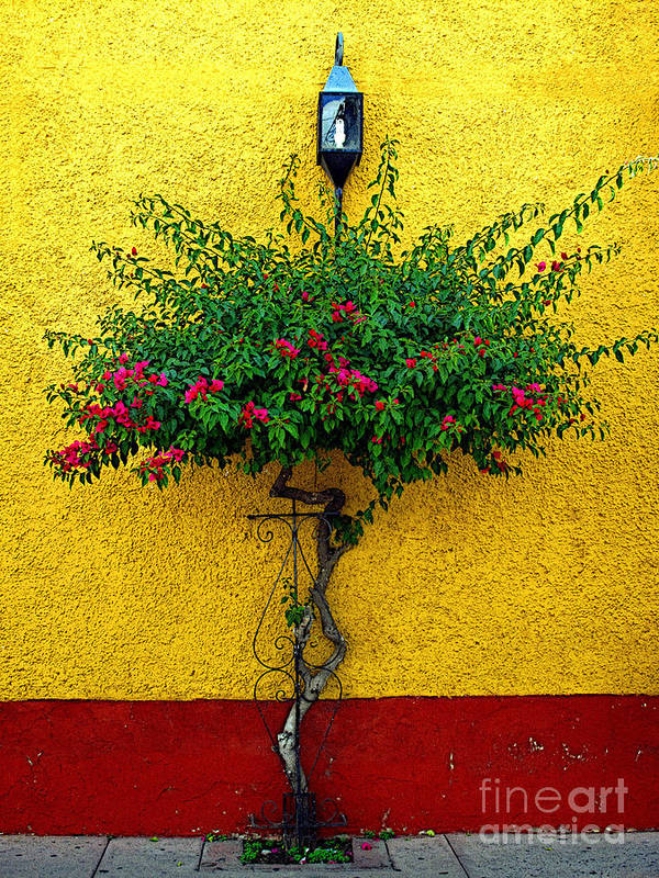 Mexico Poster featuring the photograph Moment Of Green by Mexicolors Art Photography