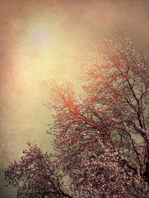 Vintage Poster featuring the photograph Vintage Cherry Blossom by Wim Lanclus