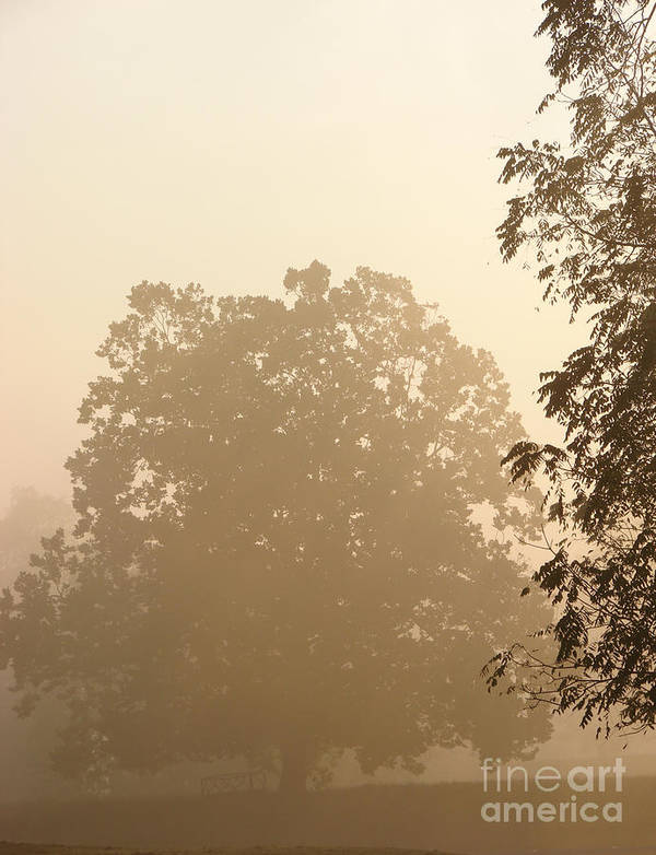 Tree Poster featuring the photograph Fog Over Countryside by Olivier Le Queinec