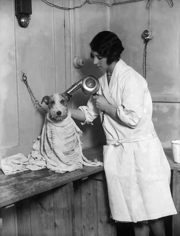 Mid Adult Poster featuring the photograph Dog Salon by Fox Photos