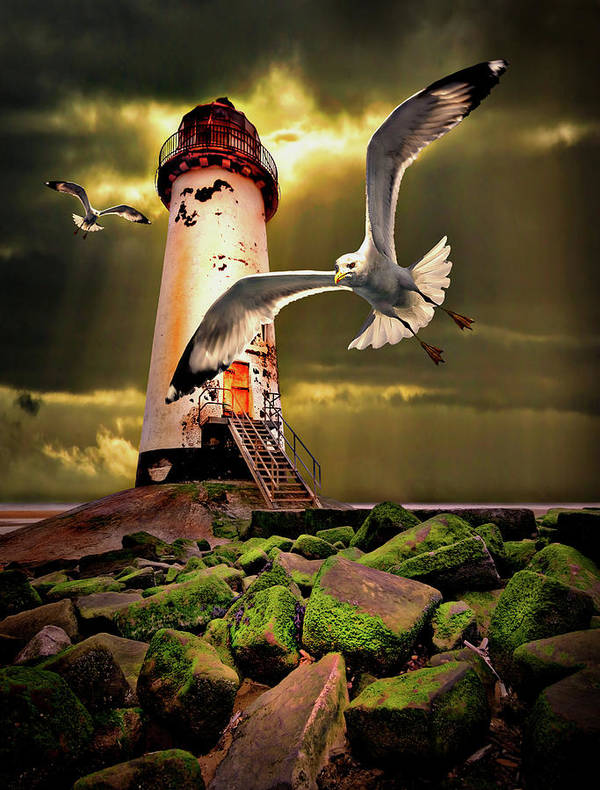 Lighthouse Poster featuring the photograph Lighthouse With Seagulls by Meirion Matthias