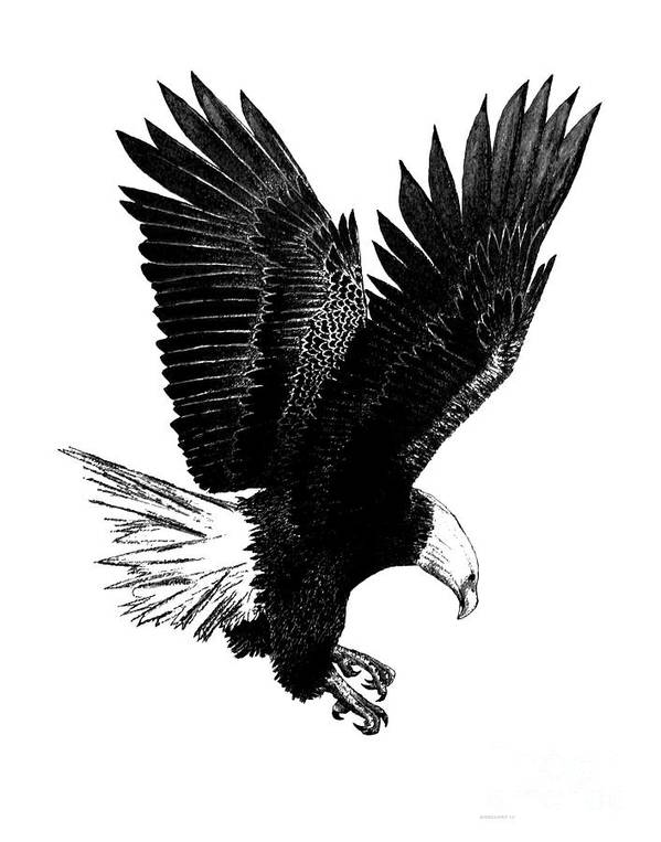 Original Poster featuring the drawing Black And White With Pen And Ink Drawing Of American Bald Eagle by Mario Perez