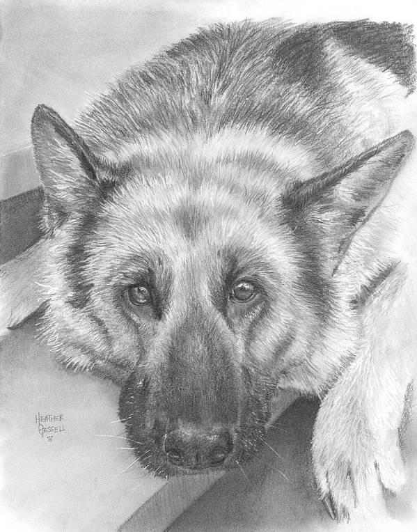 German Shepherd Poster featuring the drawing German Shepherd by Heather Gessell