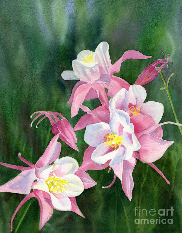 Pink Poster featuring the painting Pink Columbine Blossoms by Sharon Freeman