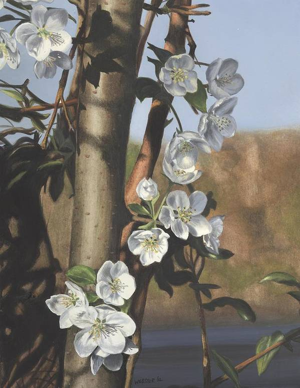 Flowers Poster featuring the painting White Flowers by Michele Renee