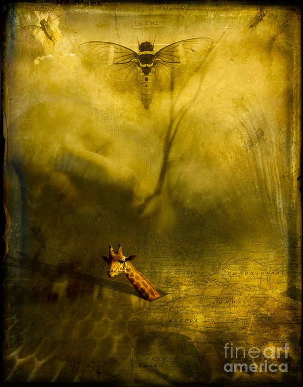 Giraffe Poster featuring the photograph Giraffe And The Heart Of Darkness by Paul Grand