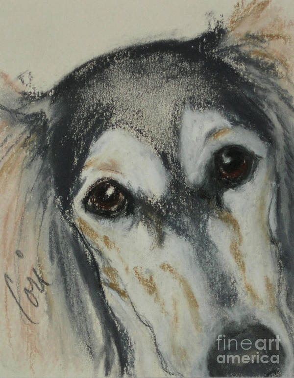 Saluki Poster featuring the drawing Unconditional Love by Cori Solomon