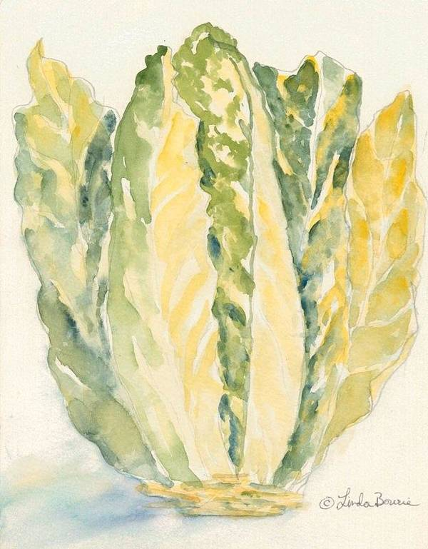 Romaine Poster featuring the painting Romaine by Linda Bourie