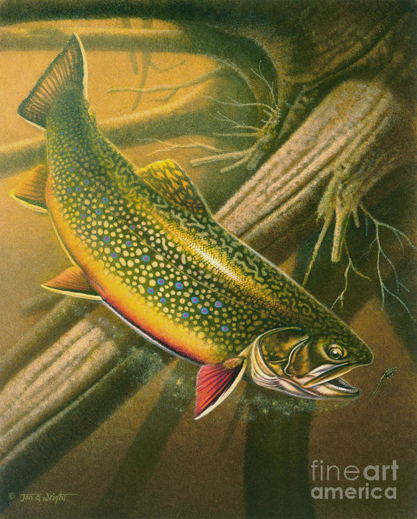 Jon Q Wright Poster featuring the painting Brook Trout Hideaway by Jon Q Wright