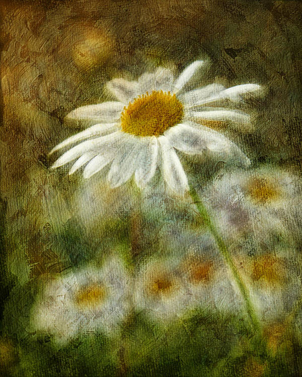 Daisies Poster featuring the photograph Daisies ... Again - P11at01 by Variance Collections