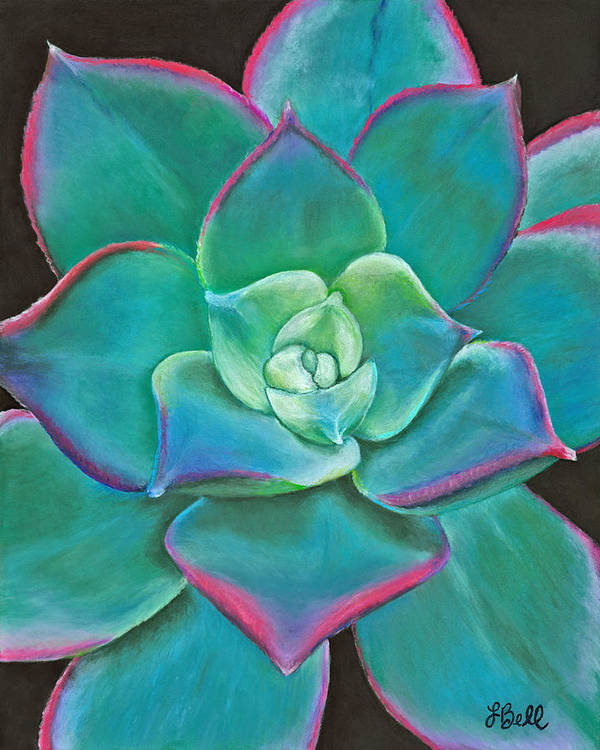 Succulent Poster featuring the drawing Opulence by Laura Bell
