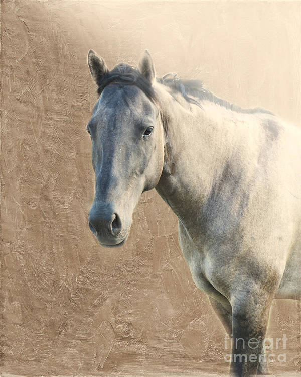 Horse Poster featuring the photograph Proud by Betty LaRue
