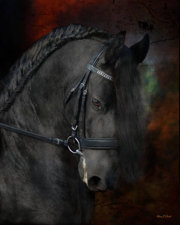 Horses Poster featuring the photograph Rembrandt by Fran J Scott