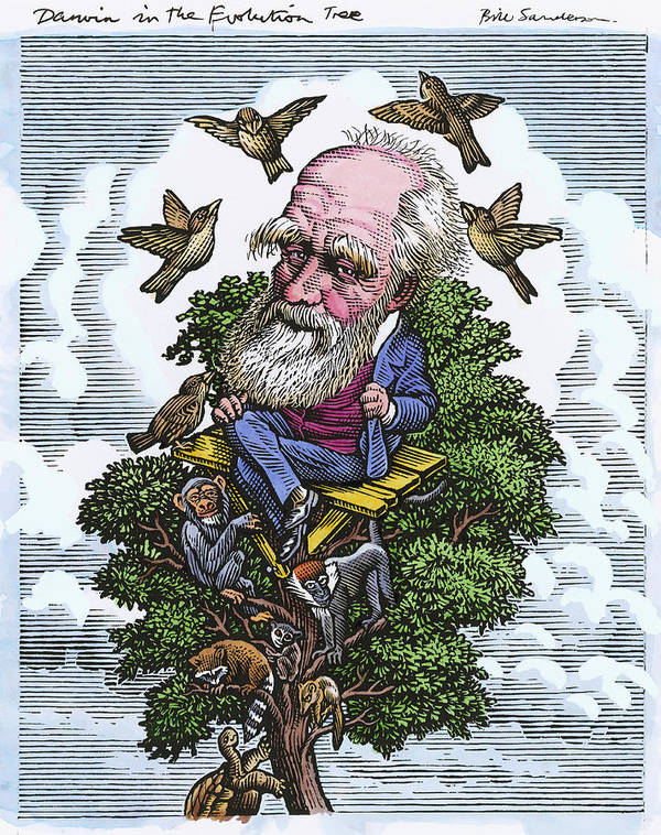 Charles Darwin Poster featuring the photograph Charles Darwin In His Evolutionary Tree by Bill Sanderson