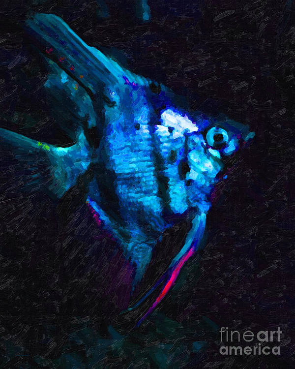 Fish Poster featuring the photograph Angelfish by Wingsdomain Art and Photography