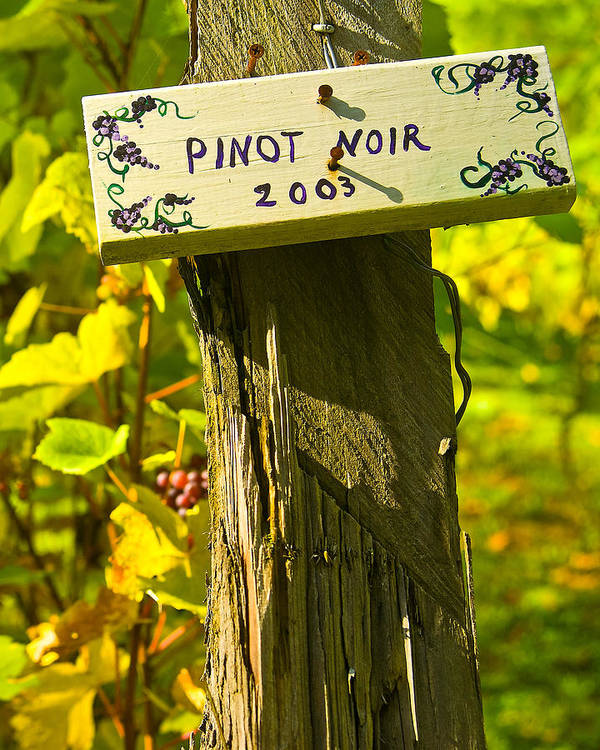 Landscape Poster featuring the photograph Pinot 03 by James Rowland