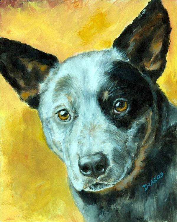 Australian Cattle Dog Poster featuring the painting Australian Cattle Dog Blue Heeler On Gold by Dottie Dracos