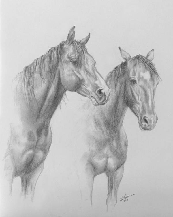 Horse Poster featuring the drawing Buddies by Kim Lockman