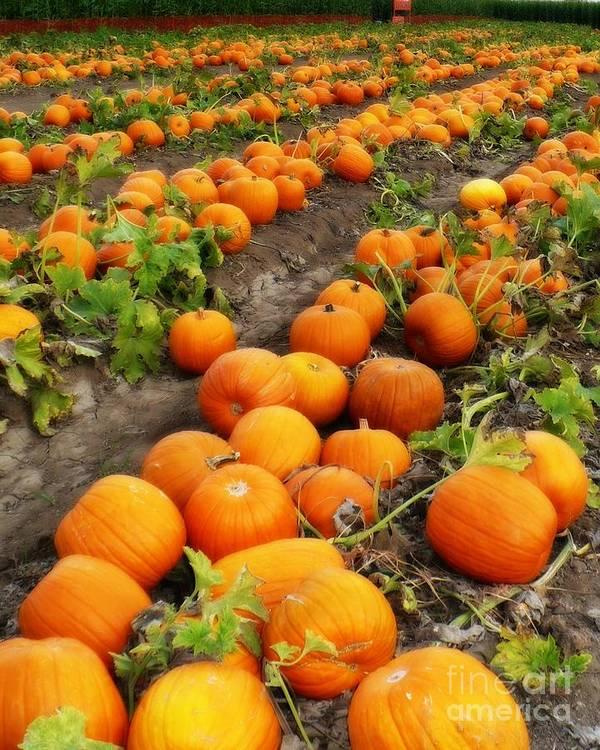 Pumpkin Patch Poster featuring the photograph Pumpkin Patch by Carol Groenen