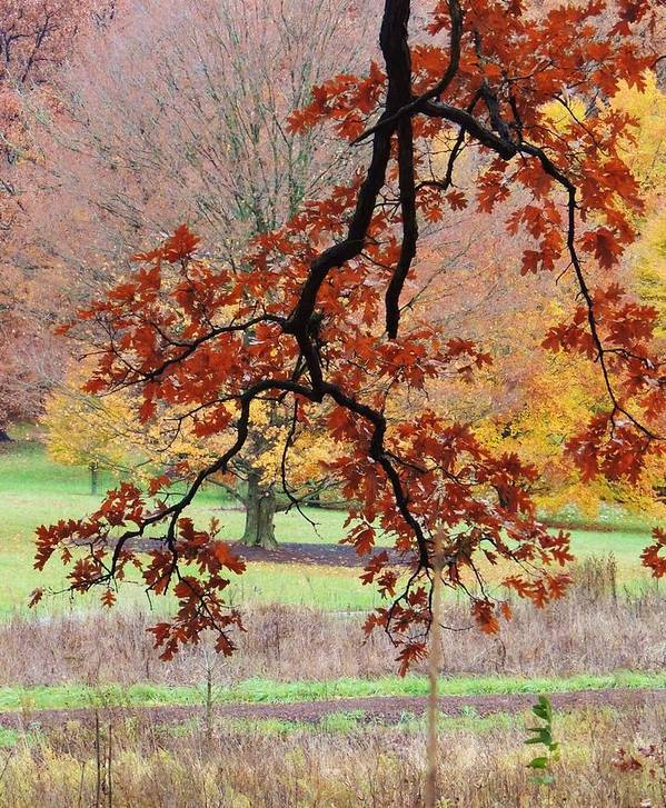 Beautiful Fall Colors Poster featuring the photograph Autumn Rainbow by Todd Sherlock