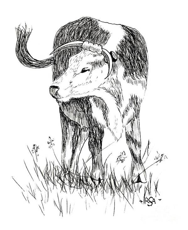 Cow Poster featuring the drawing Cow In Pen And Ink by Rose Santuci-Sofranko