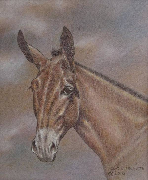 Poster featuring the pastel Mule Head by Dorothy Coatsworth