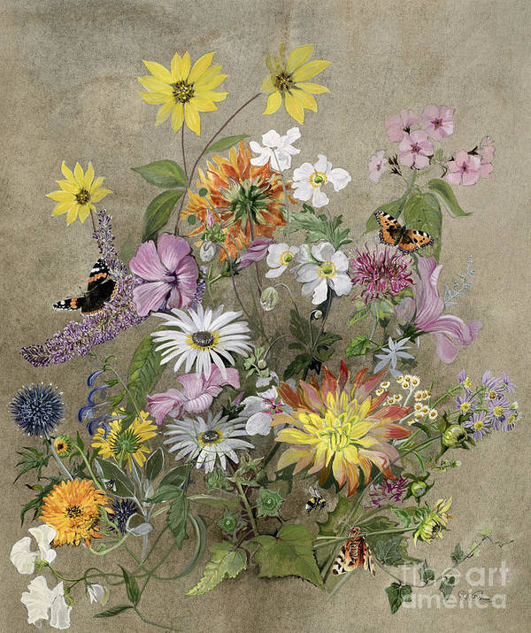 Red Admiral; Butterfly; Daisy; Sweet; Pea; Narcissus; Poster featuring the painting Summer Flowers by John Gubbins