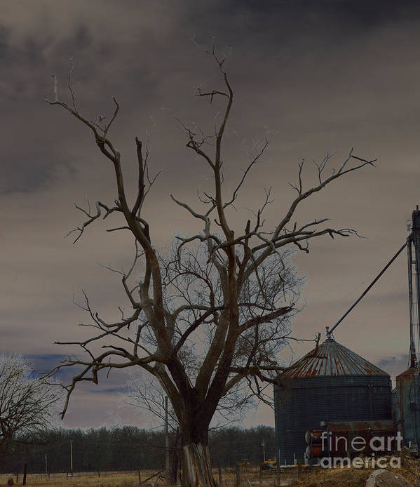 Spooky Poster featuring the photograph The Haunting Tree by Alys Caviness-Gober