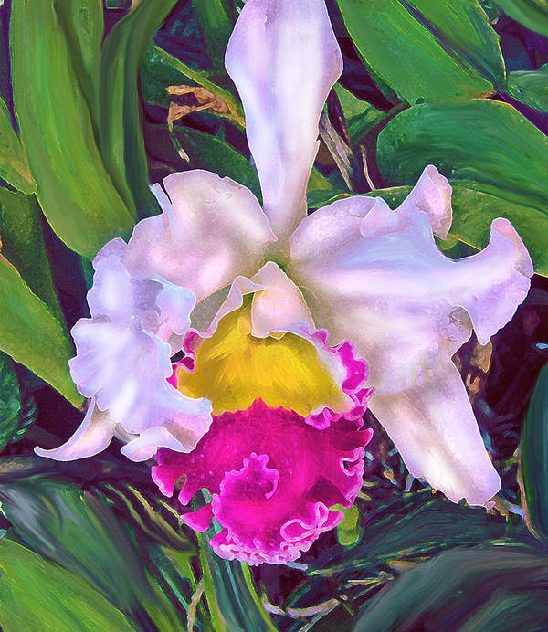 Orchid Poster featuring the digital art Tropical Orchid by Jane Schnetlage