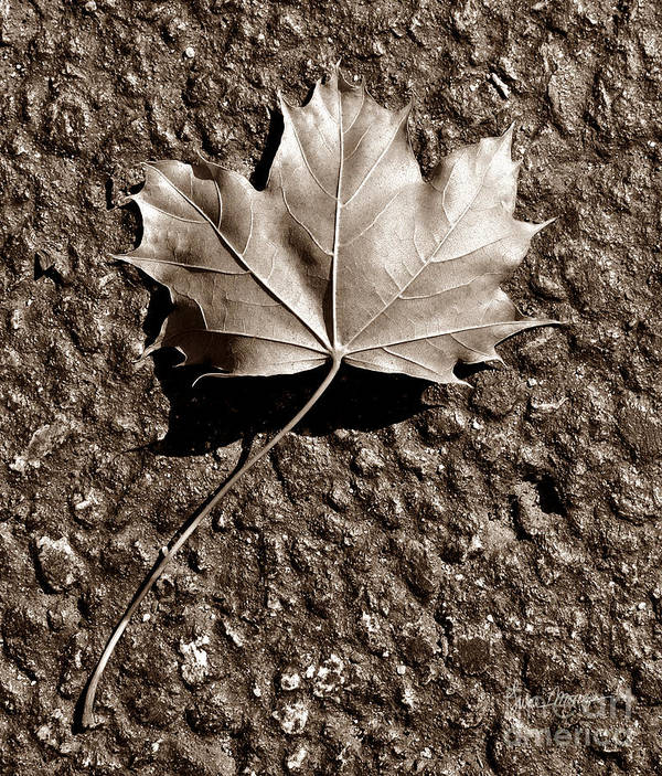 Autumn Poster featuring the photograph Dipped In Bronze by Luke Moore