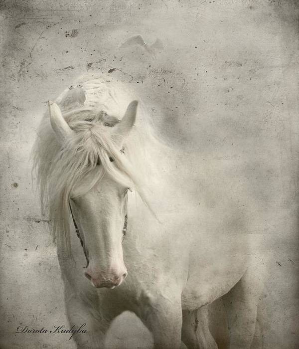 White Horse Poster featuring the photograph Nesting Time by Dorota Kudyba