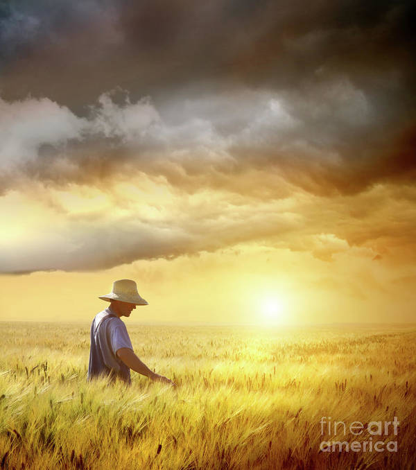 Agricultural Poster featuring the photograph Farmer Checking His Crop Of Wheat by Sandra Cunningham