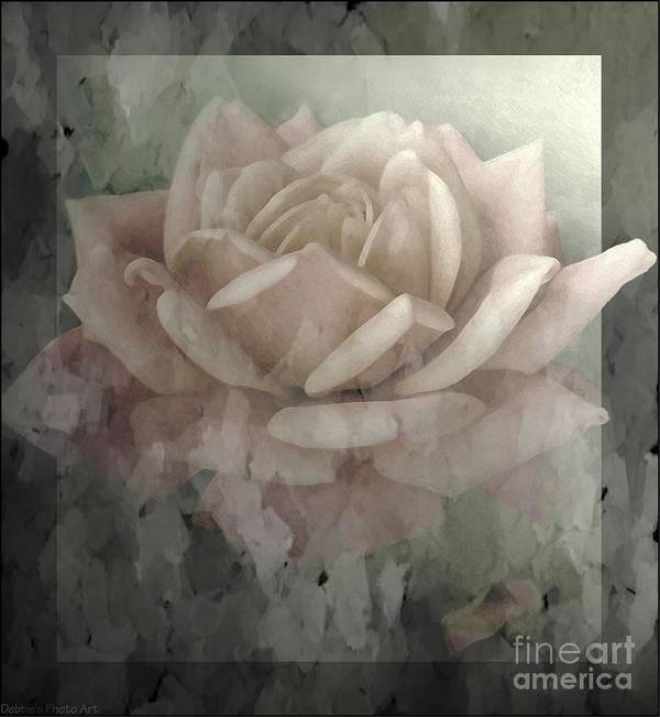 Nature Poster featuring the photograph Pale Rose Photoart by Debbie Portwood