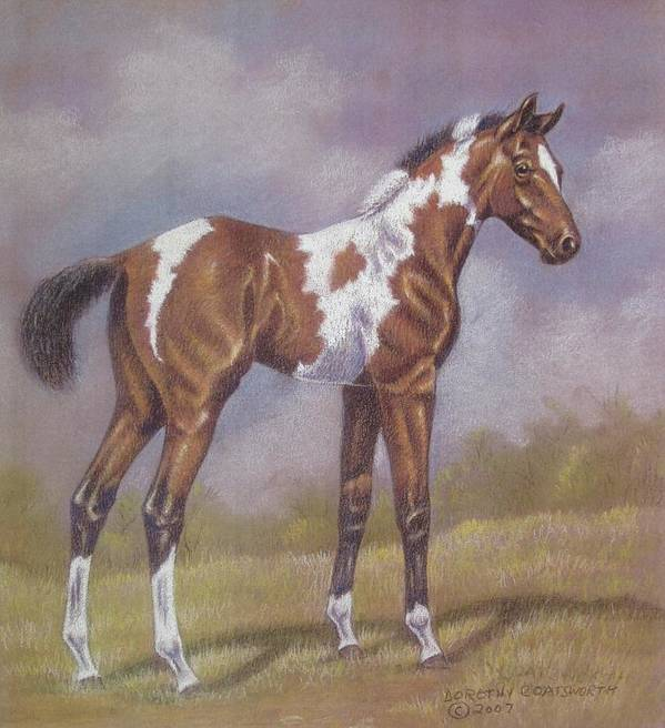 Foa; Paint Horse Poster featuring the pastel Bay Paint Foal by Dorothy Coatsworth