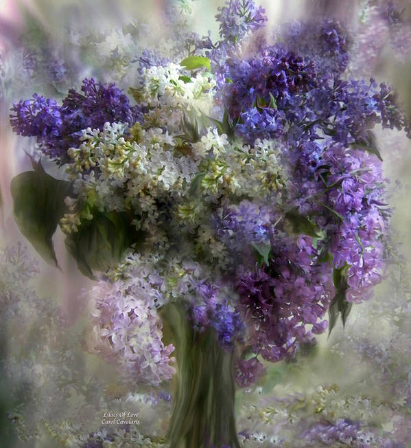 Lilacs Poster featuring the mixed media Lilacs Of Love by Carol Cavalaris