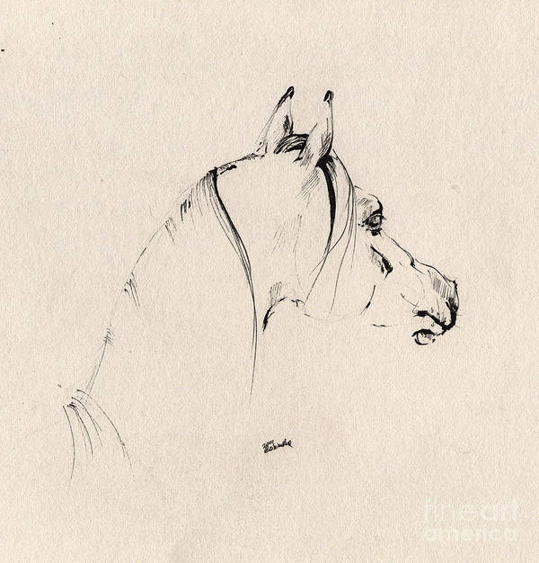 Horse Poster featuring the drawing The Horse Sketch by Angel Tarantella
